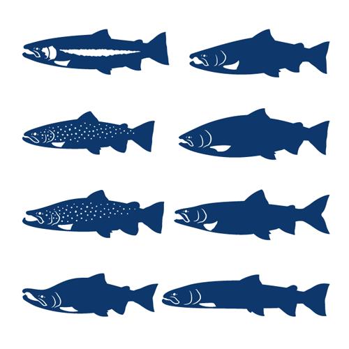 trout03